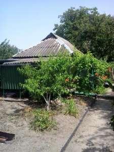 Дача на Потемкинском острове, 5-й причал - изображение 1