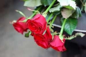 Доставка цветов Запорожье - изображение 1