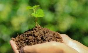 Инсектициды, акарициды. Средства защиты растений. Широкий ассортимент - изображение 1
