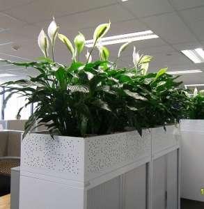 Озеленение офисов, ресторанов, квартир и др. помещений!!! - изображение 1