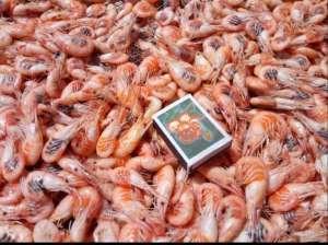 Продажа черноморской креветки - изображение 1