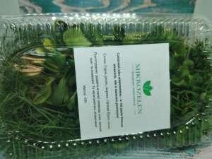 Продам микрозелень оптом - изображение 1
