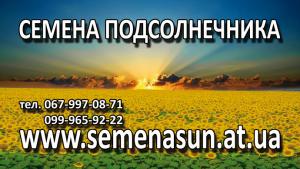 продам семена подсолнечника pioneer,syngenta 150$ 0999659222 - изображение 1