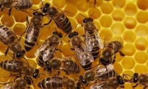 Продаються бджолосім'ї, рамки, суш - изображение 1