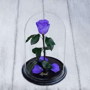 Роза в колбе - изображение 1