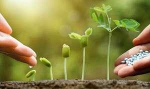 Стимуляторы роста.Агро центр B&SProduct.Товары для растениеводства - изображение 1