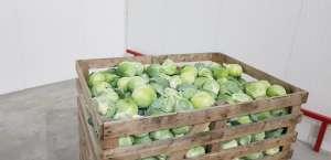 Только оптовые продажи овощей в Рахове. - изображение 1