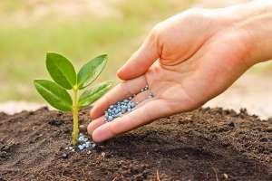 Удобрения пестициды сельское хозяйство - изображение 1