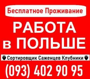 ⭕ Требуются СОРТИРОВЩИКИ Саженцев Клубники ПОЛЬША - изображение 1